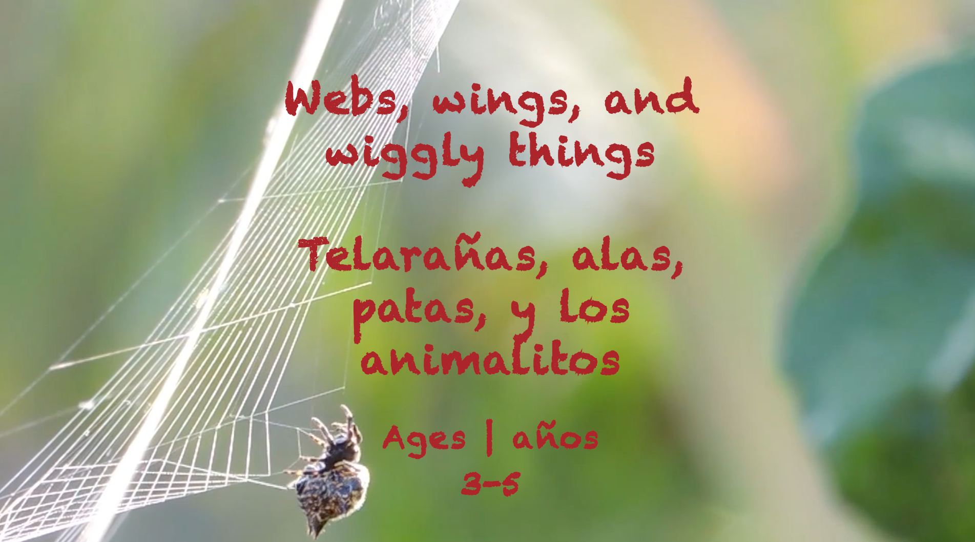 Week 36 Webs Wings and Wiggly Things Card Ages 3-5