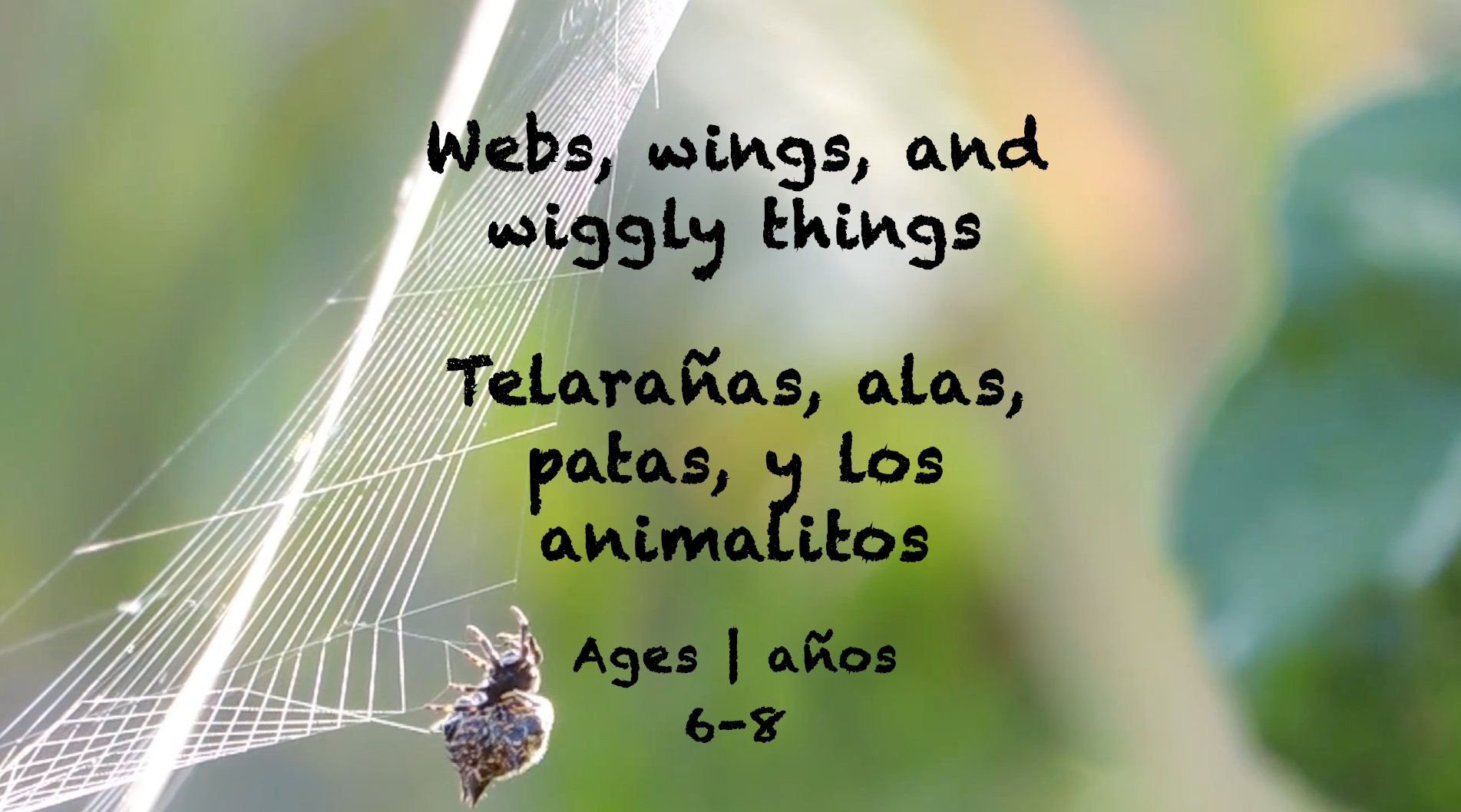 Week 36 Webs Wings and Wiggly Things Card Ages 6-8